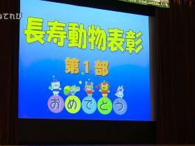 大阪動物愛護フェス01