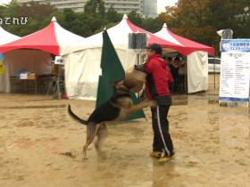 大阪城動物愛護フェスティバル02
