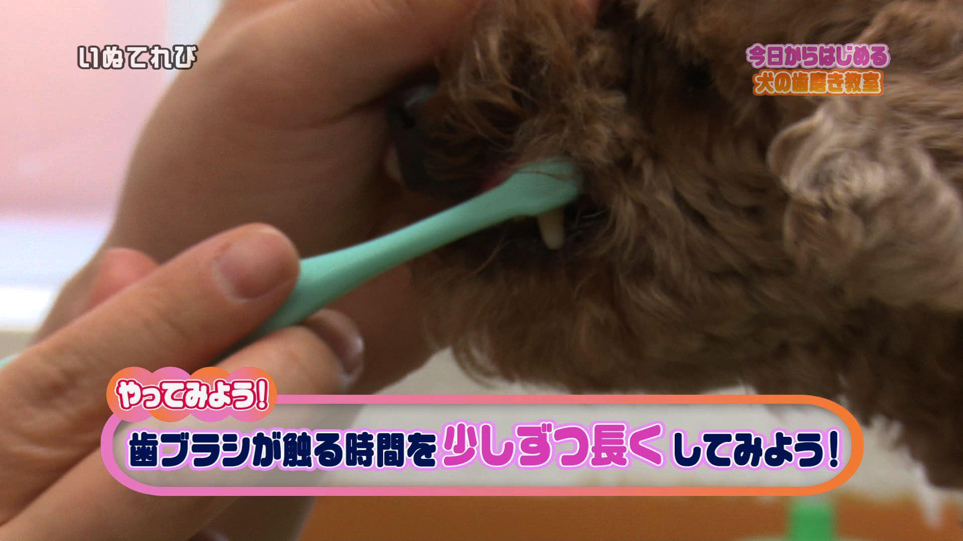 歯磨き02